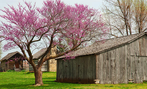 The Gray Campbell Farmstead Print by Lena Wilhite