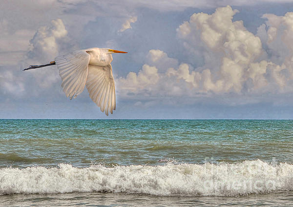 The Great Egret And The Ocean Print by Kathy Baccari