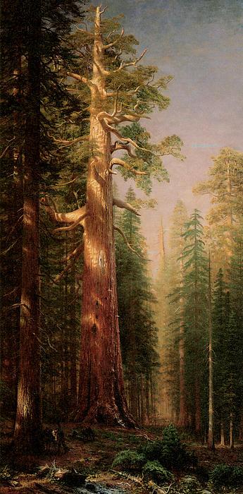 The Great Trees Mariposa Grove California Print by Albert Bierstadt