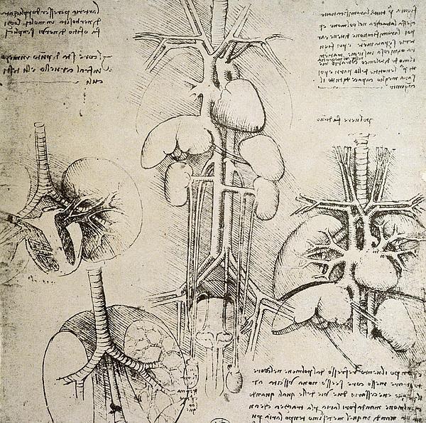The Heart And The Circulation Print by Leonardo Da Vinci