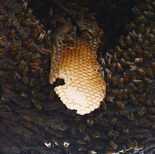 The Hive  Print by Shawn Marlow
