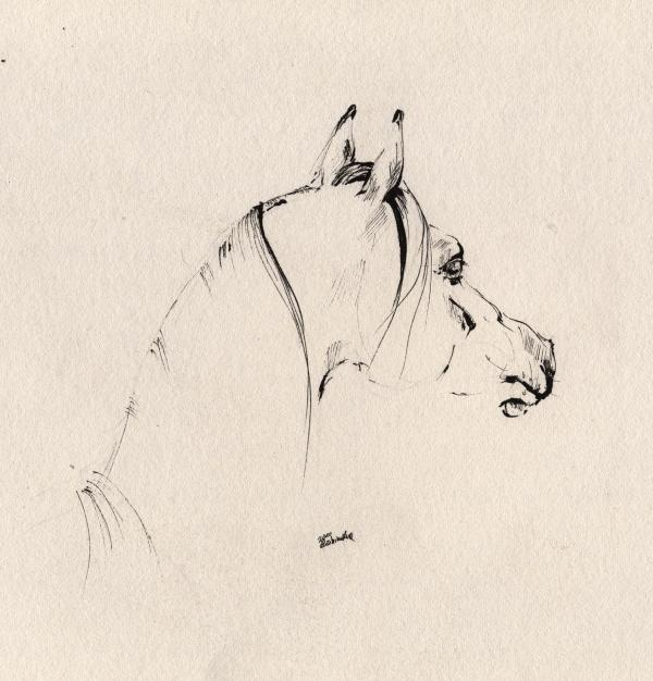 The Horse Sketch Print by Angel  Tarantella