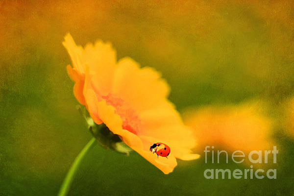 The Lady Bug Print by Darren Fisher