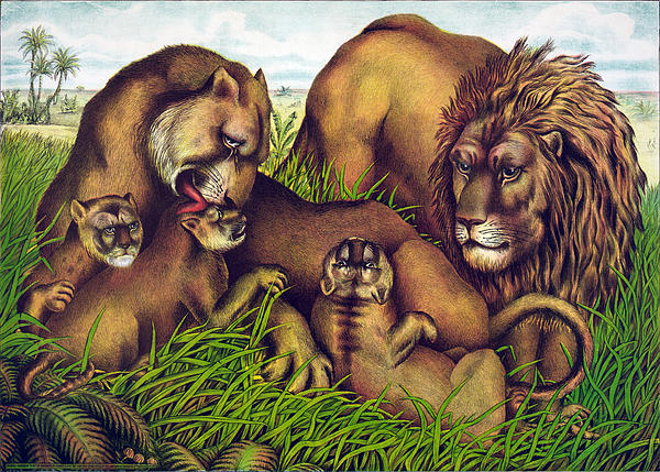 The Lion Family Print by Nomad Art And  Design