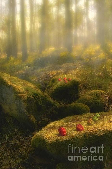 Veikko Suikkanen - The Magic Forest