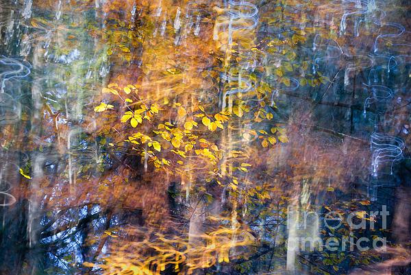Yuri Santin - The magic of a forest