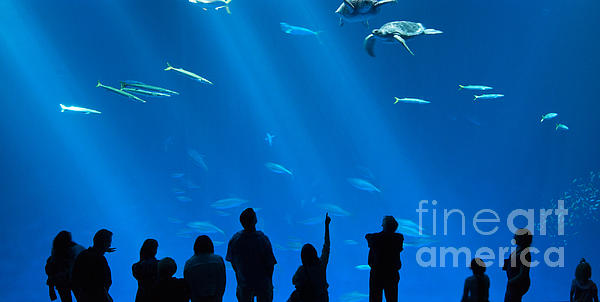 The Magnificent Open Sea Exhibit At The Monterey Bay Aquarium. Print by Jamie Pham