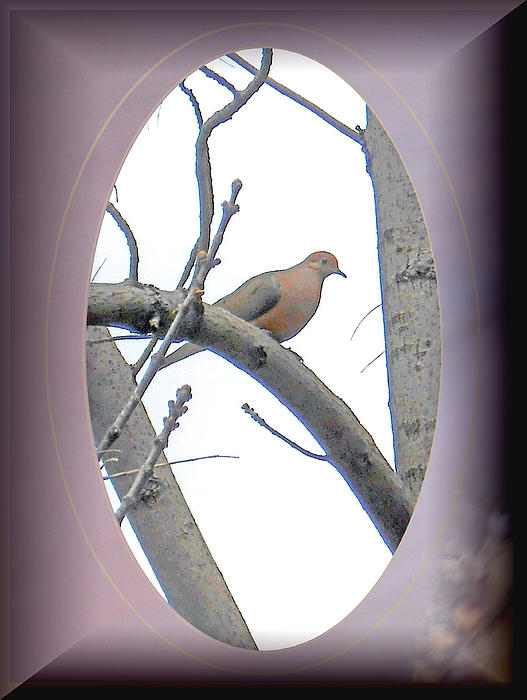 The Mourning Dove Print by Patricia Keller