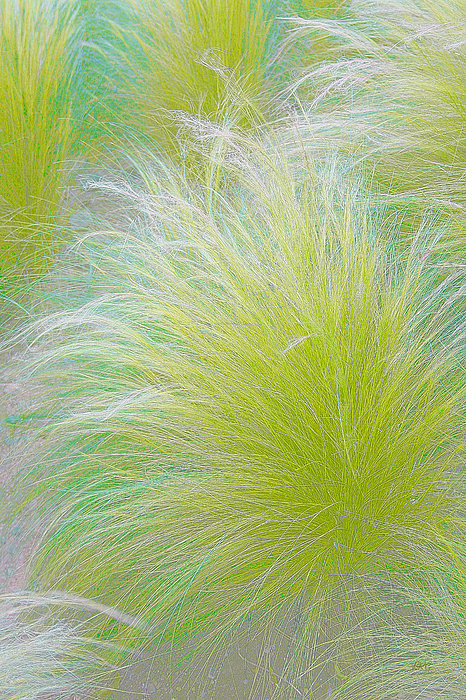 The Nature Of Grass   Print by Ben and Raisa Gertsberg
