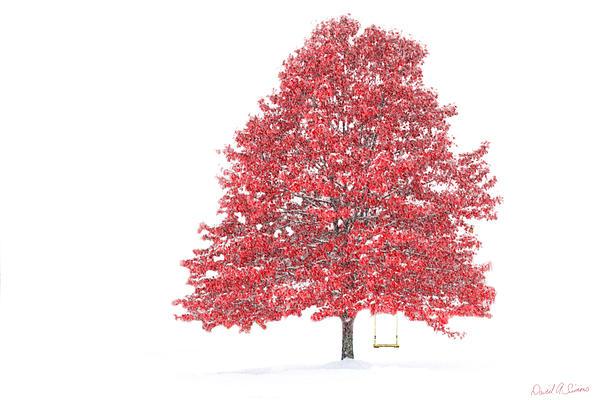 The Oak Tree Print by David Simons