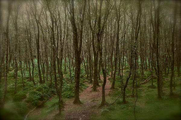Lisa Fortin Jackson - The Pathless Wood
