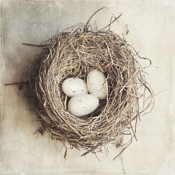 The Perfect Nest Print by Lisa Russo