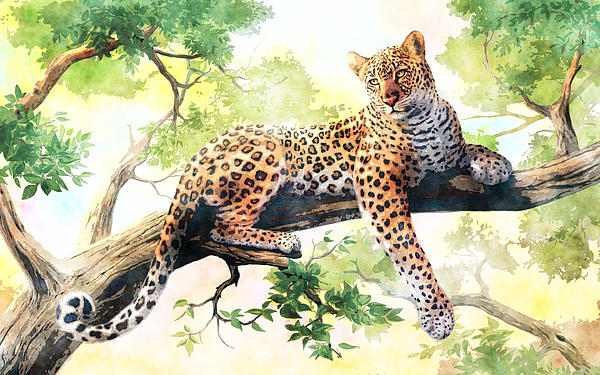 MotionAge Art And Design - The Resting Leopard