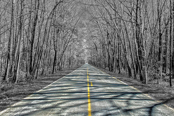 The Road Print by Steven  Taylor