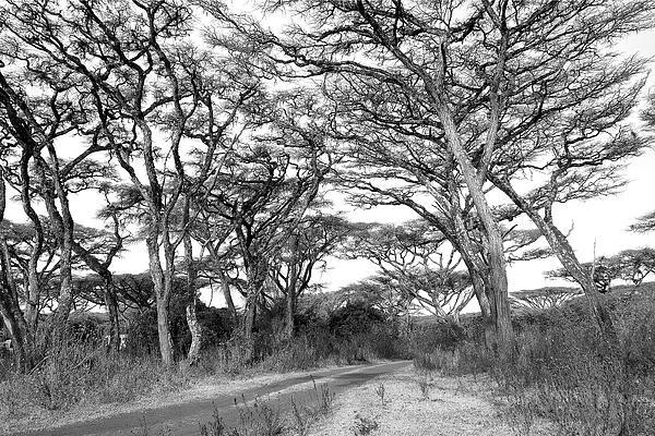 Dawn J Benko - The Road to Ngorongoro