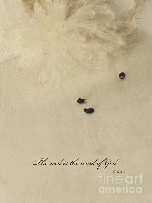 Ella Kaye - The seed is the word of God
