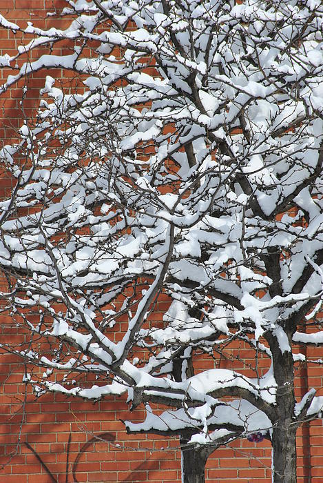 The Snow And The Wall Print by Frederico Borges