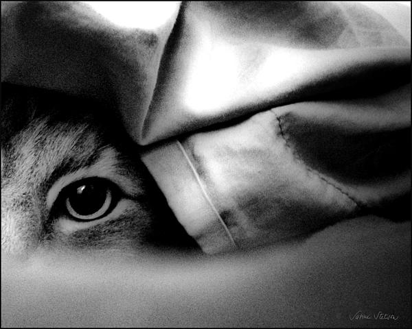 The Spy Print by Sabine Stetson