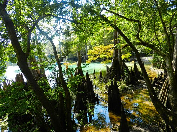The Swamp By The Springs Print by Julie Dant