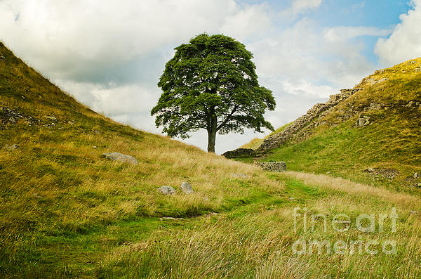 MaryJane Armstrong - The Sycamore Gap along Hadrians Wall