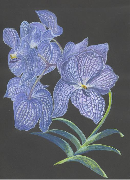 The Vanda Orchid Print by Carol Wisniewski