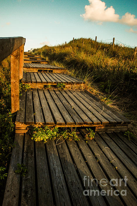 The Way To The Sea Print by Hannes Cmarits