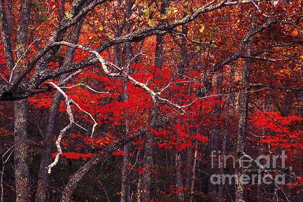 The Woods Aflame In Red Print by Paul W Faust -  Impressions of Light