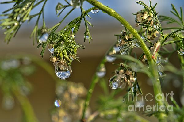 The World In A Drop Of Water Print by Peggy J Hughes