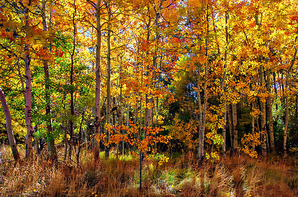 Thomas Creek Fall Color Print by Scott McGuire