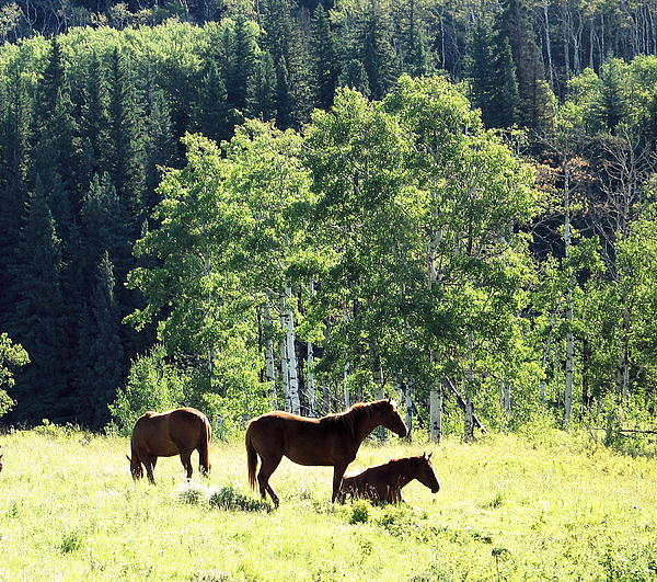 Three Horses Print by Gerry Bates