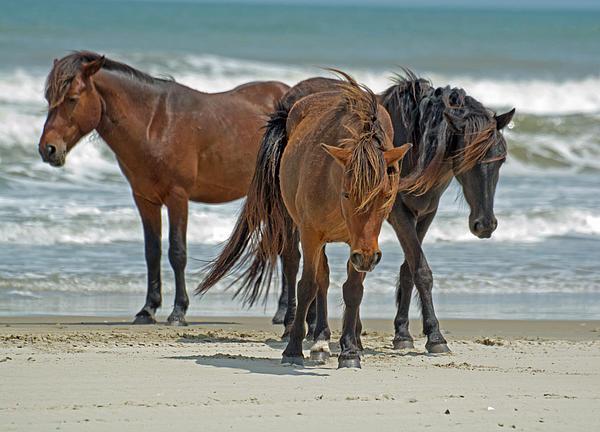Paul Weiss - Three Wild Horses