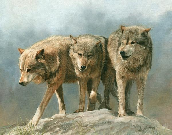 Three Wolves Print by David Stribbling