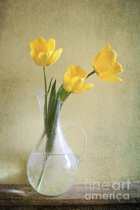Three Yellow Tulips Print by Diana Kraleva
