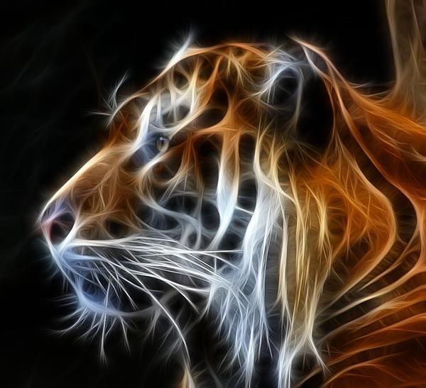 Tiger Fractal Print by Shane Bechler