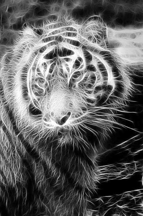 Tiger Tiger Print by Mark Kember