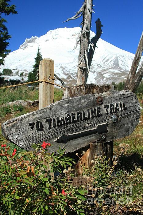 Timberline Trail Print by Cari Gesch