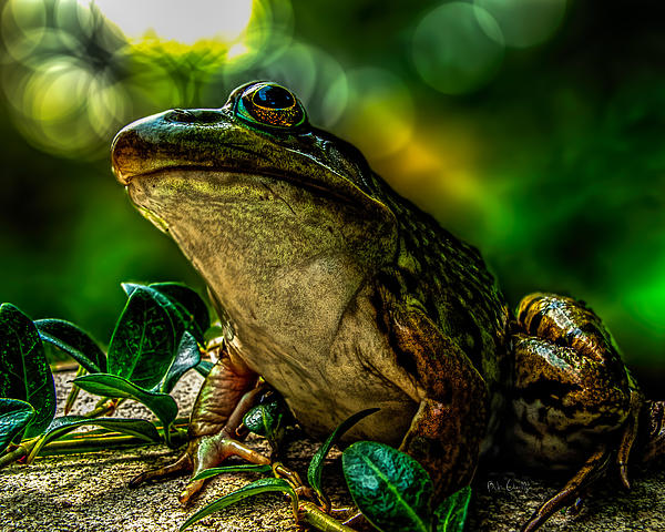 Time Spent With The Frog Print by Bob Orsillo