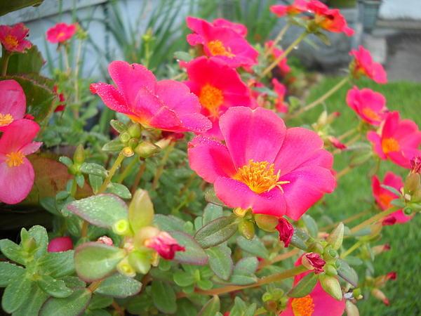 Marian Hebert - Tiny Flowers
