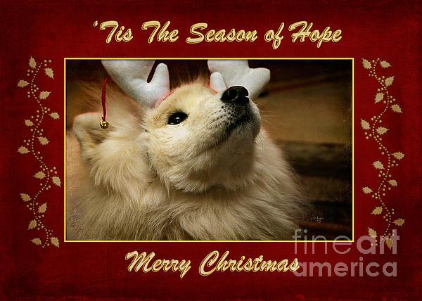 'tis The Season Of Hope Merry Christmas Print by Lois Bryan