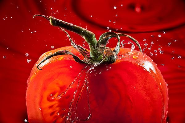 Tomato Freshsplash 2 Print by Steve Gadomski