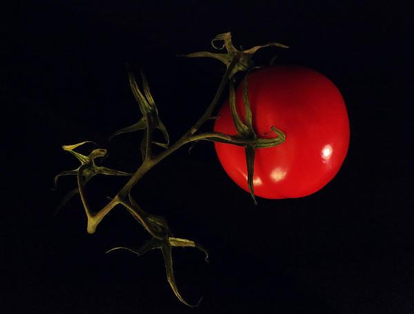 Tomato With Stem Print by Patricia Januszkiewicz