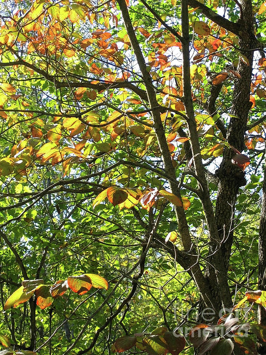 Touch Of Autumn Print by Ann Horn