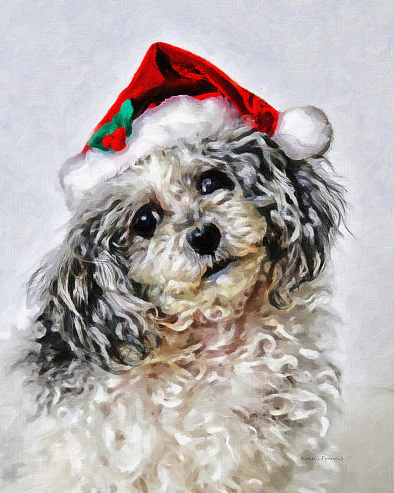 Kenny Francis - Toy Poodle- Animal- Christmas