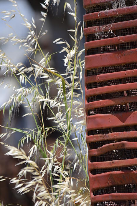 Tractor Grille And Grasses Print by Jillian Ryder