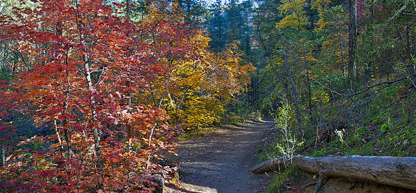 Trail Of Maples Print by Brian Lambert