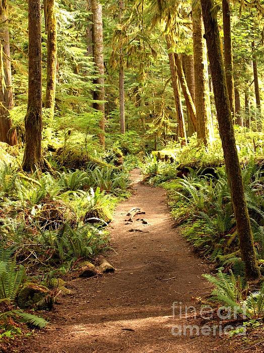 Trail Through The Rainforest Print by Carol Groenen