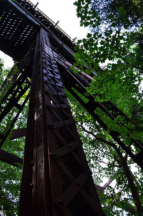 Train Trestle In The Woods Print by Michelle Calkins