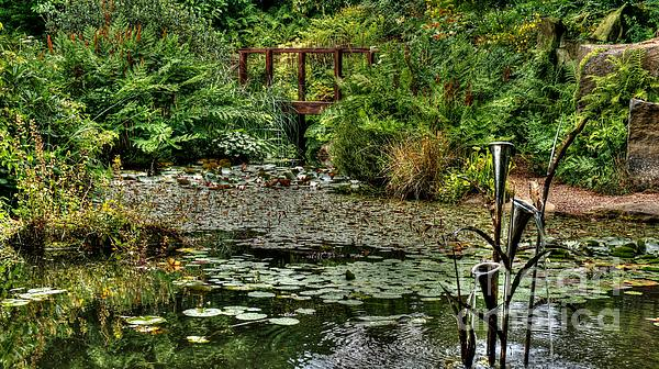 Mickeys Photography - Tranquil