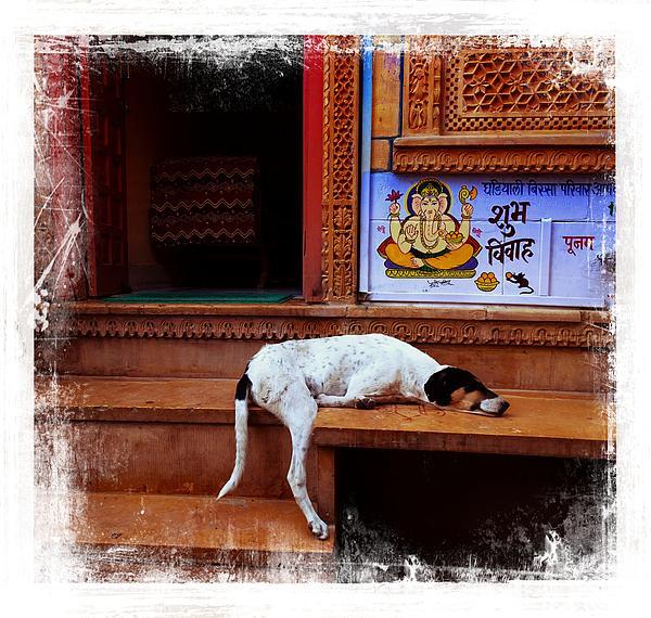 Sue Jacobi - Travel Sleepy Happy Doggie Jaisalmer Fort India Rajasthan