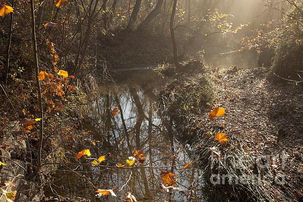 Travertine Creek In The Woods Print by Iris Greenwell